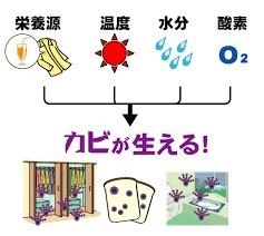 yjimage (1).jpg
